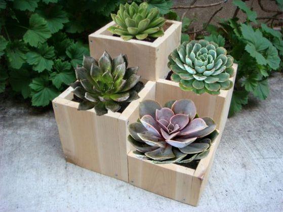 pequeñas plantas ornamentales