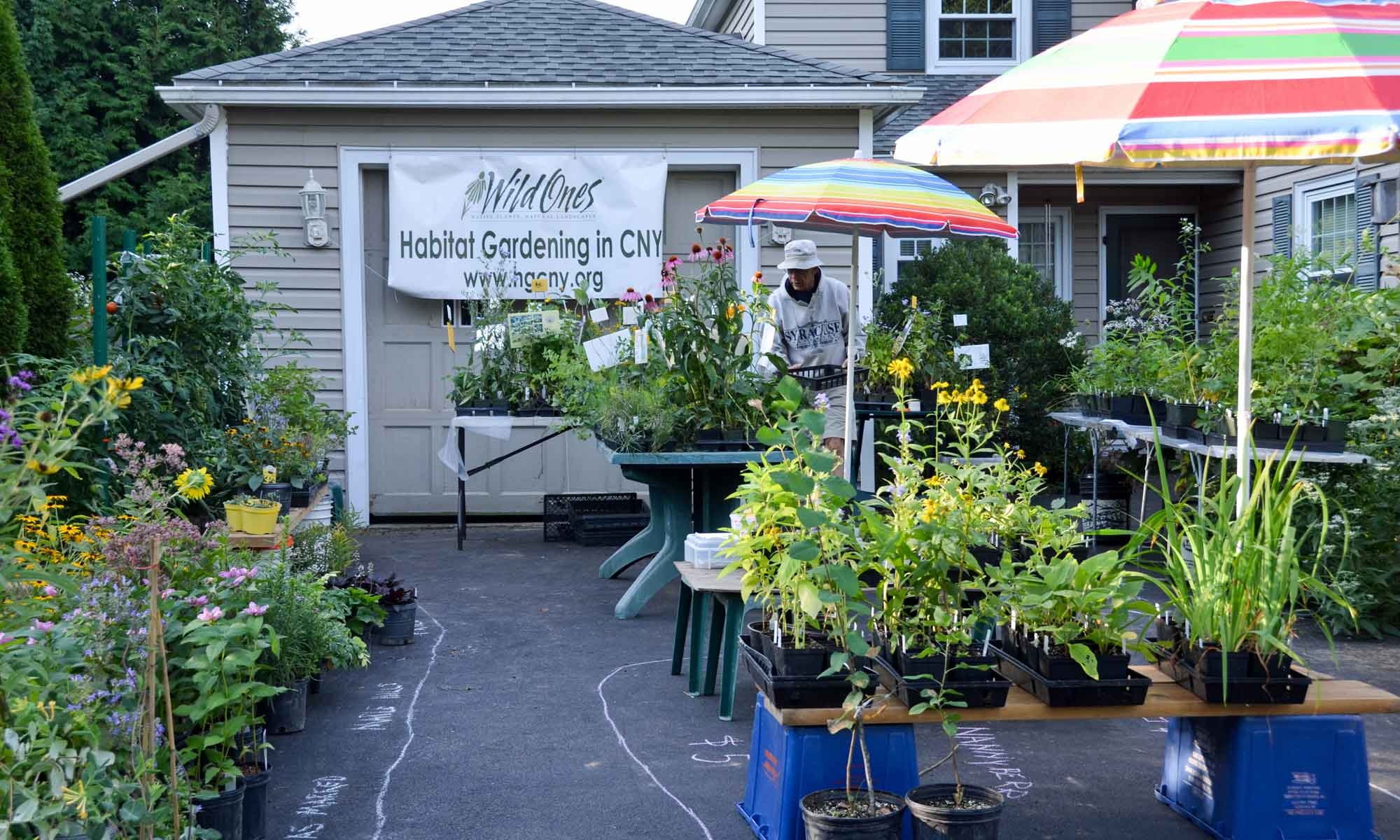 Asian Plants For Sale Plant Sales Habitat Gardening In Central Ny