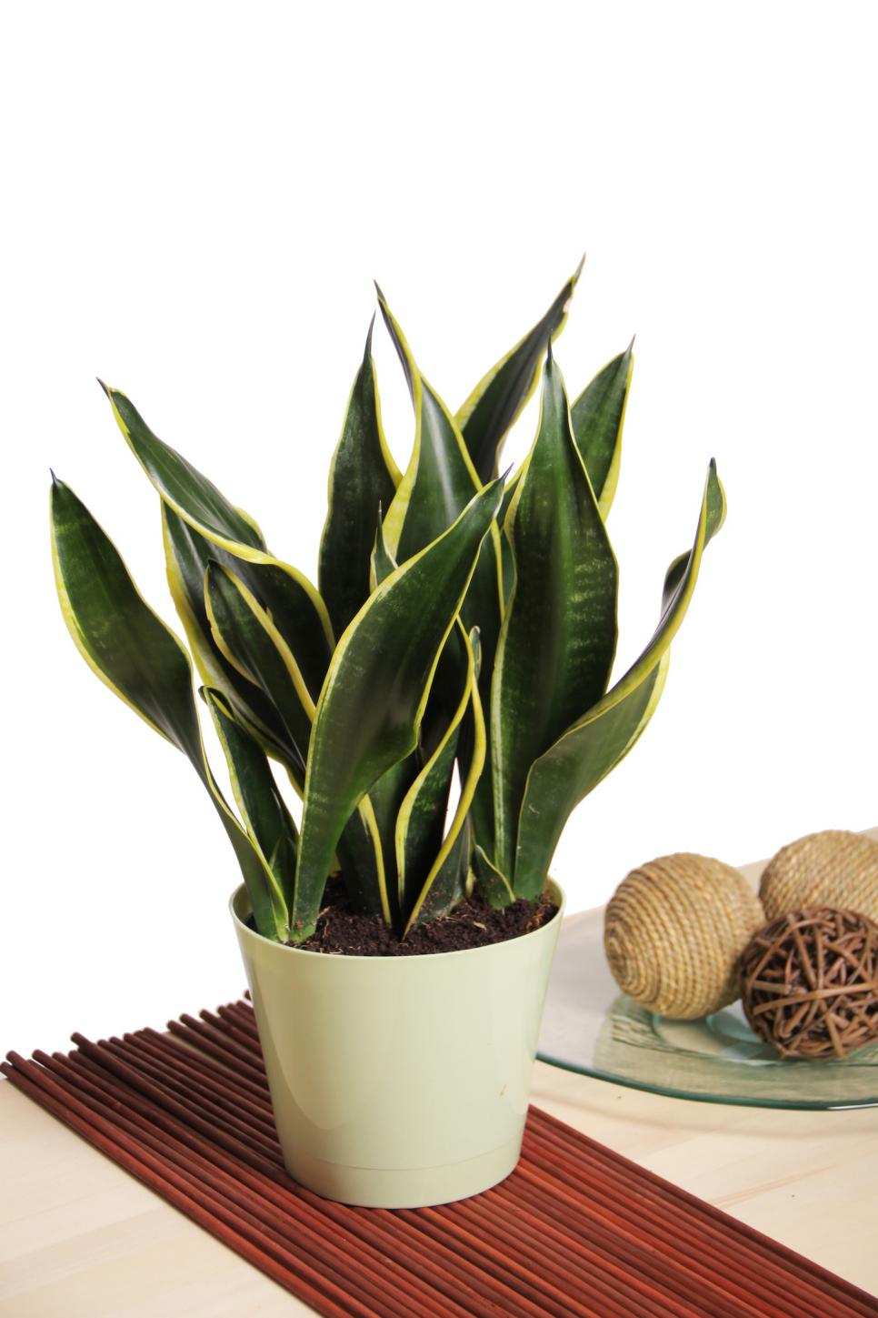 easy houseplants all my indoors plants F0 9F 8C BF 5
