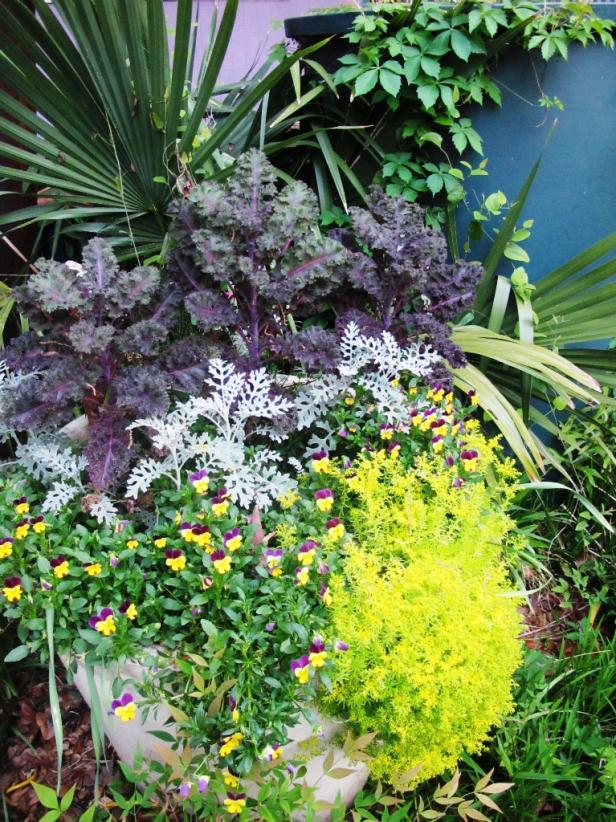 Perennials to Plant in Fall for Spring Color HGTV - photo of spring