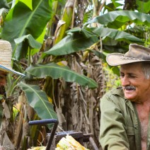 Campesinos in Vinales