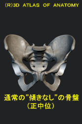 正中位の骨盤の位置