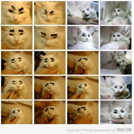 Gato com sobrancelhas