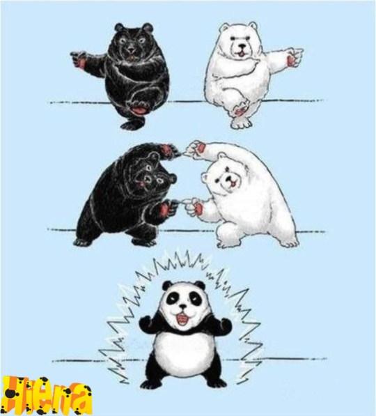formação dos pandas atraves da dança de fusao de um urso branco e um urso negro