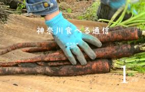 神奈川食べる通信2016号1月号