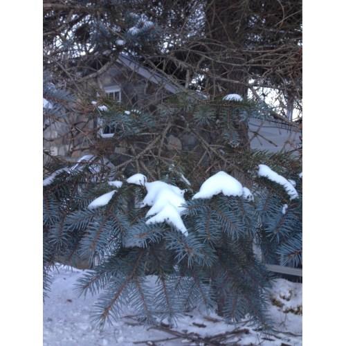 Medium Crop Of Pine Tree Roots