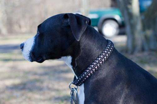 Medium Of Paracord Dog Collar