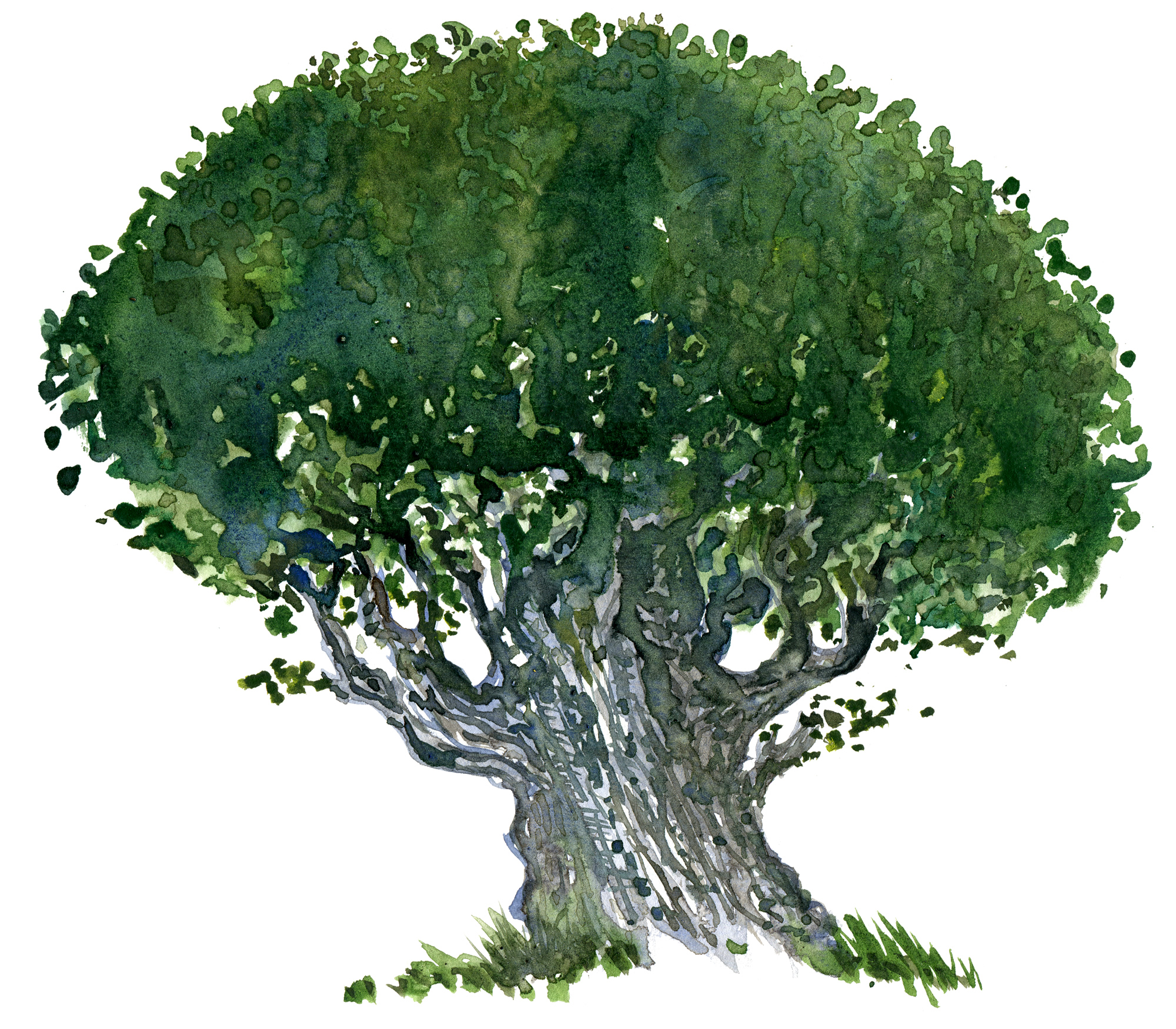 Tree Drawing With Watercolor Watercolor Tree Sketch Hiking Artist Basecamp