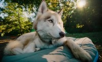 Backpacking Dog Bed: Choosing the Right Bed for Your Dog