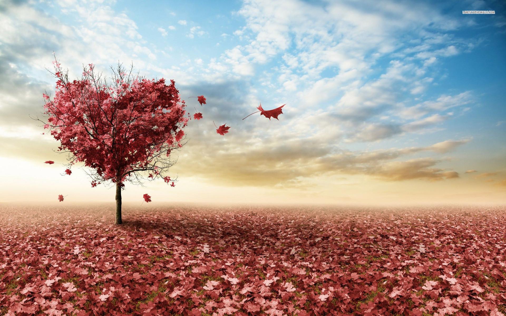 Apple Wallpaper Iphone 7 Hd Die 90 Besten Blumen Hintergrundbilder F 252 R Iphone