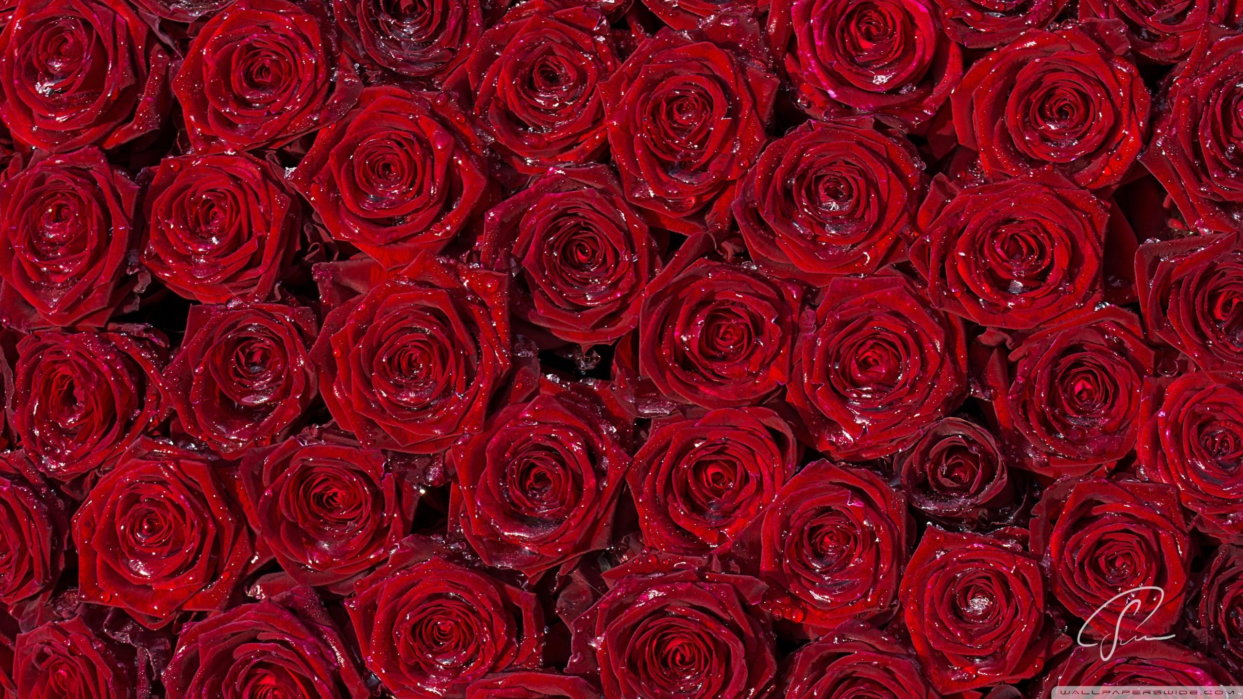 Iphone 5 Wallpaper Floral Die 72 Besten Schwarze Rosen Hintergrundbilder