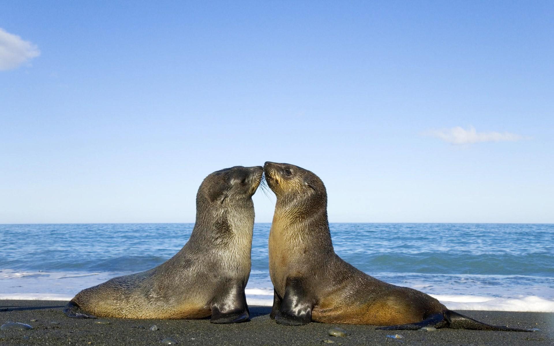 Cute Baby Seals Wallpapers Die 73 Besten S 252 223 E Tierbabys Hintergrundbilder