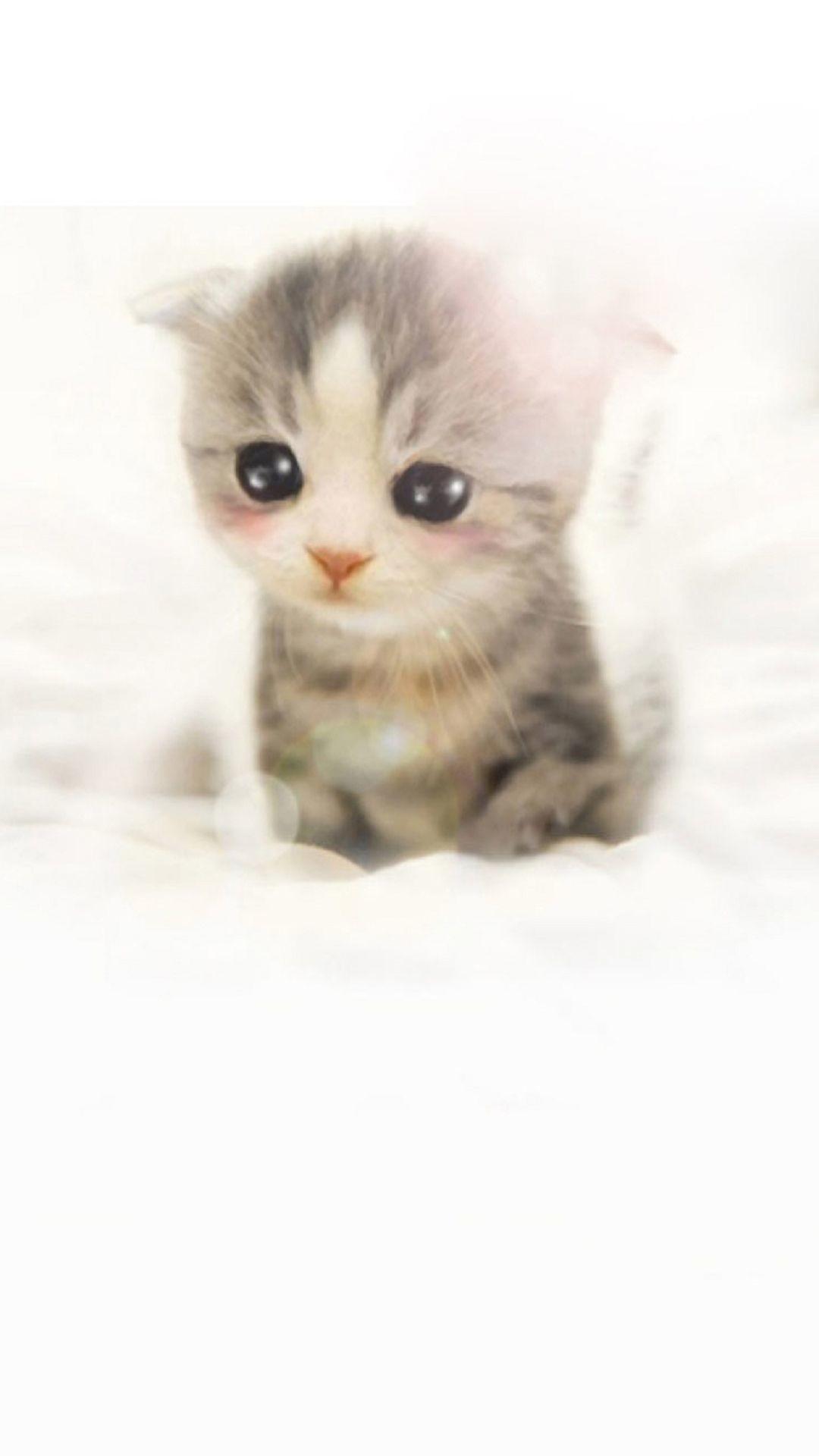 Cute Pikachu Iphone 5 Wallpaper Die 73 Besten S 252 223 E Tierbabys Hintergrundbilder
