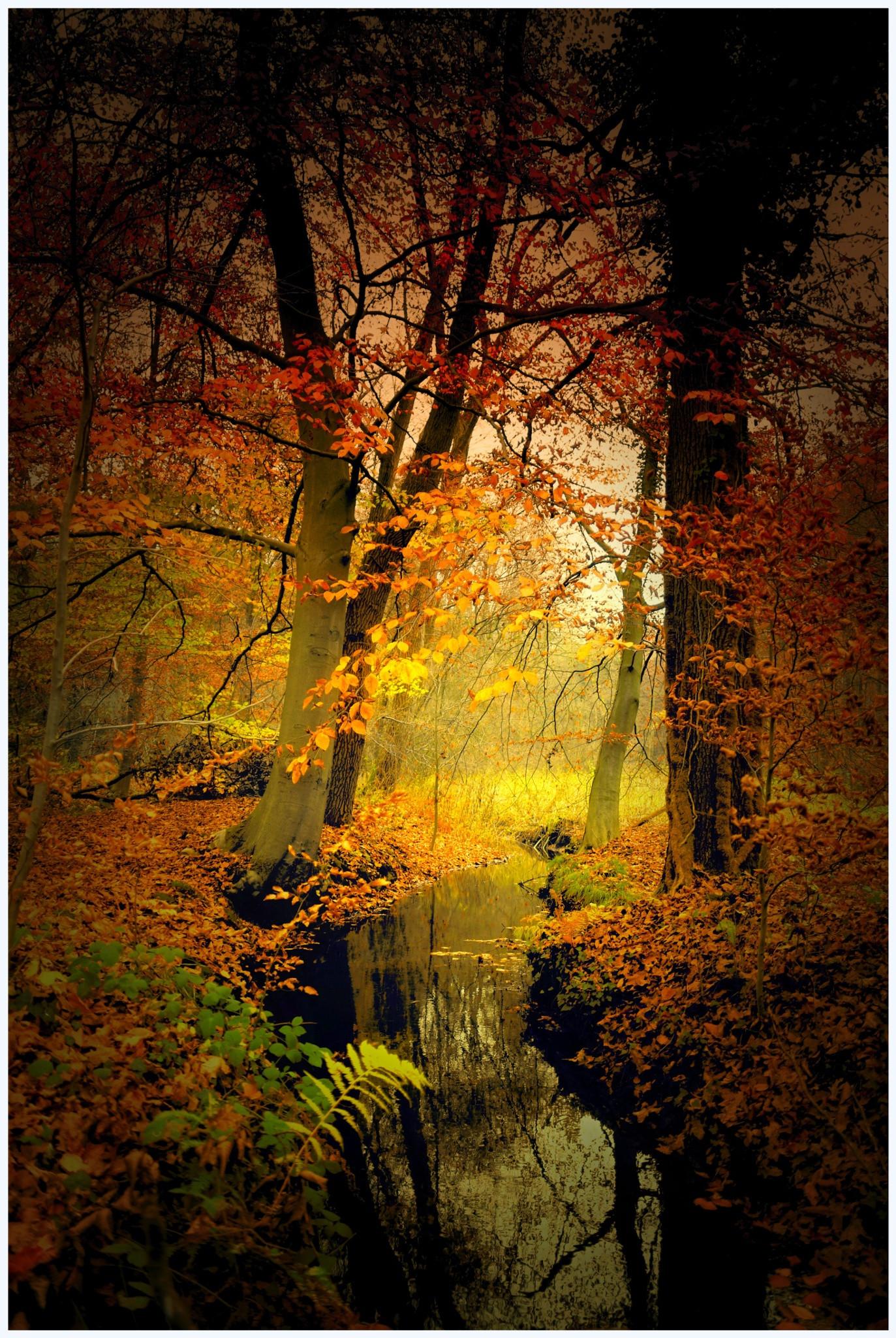 Colorado Fall Wallpaper Die 72 Besten Herbstlandschaft Hintergrundbilder