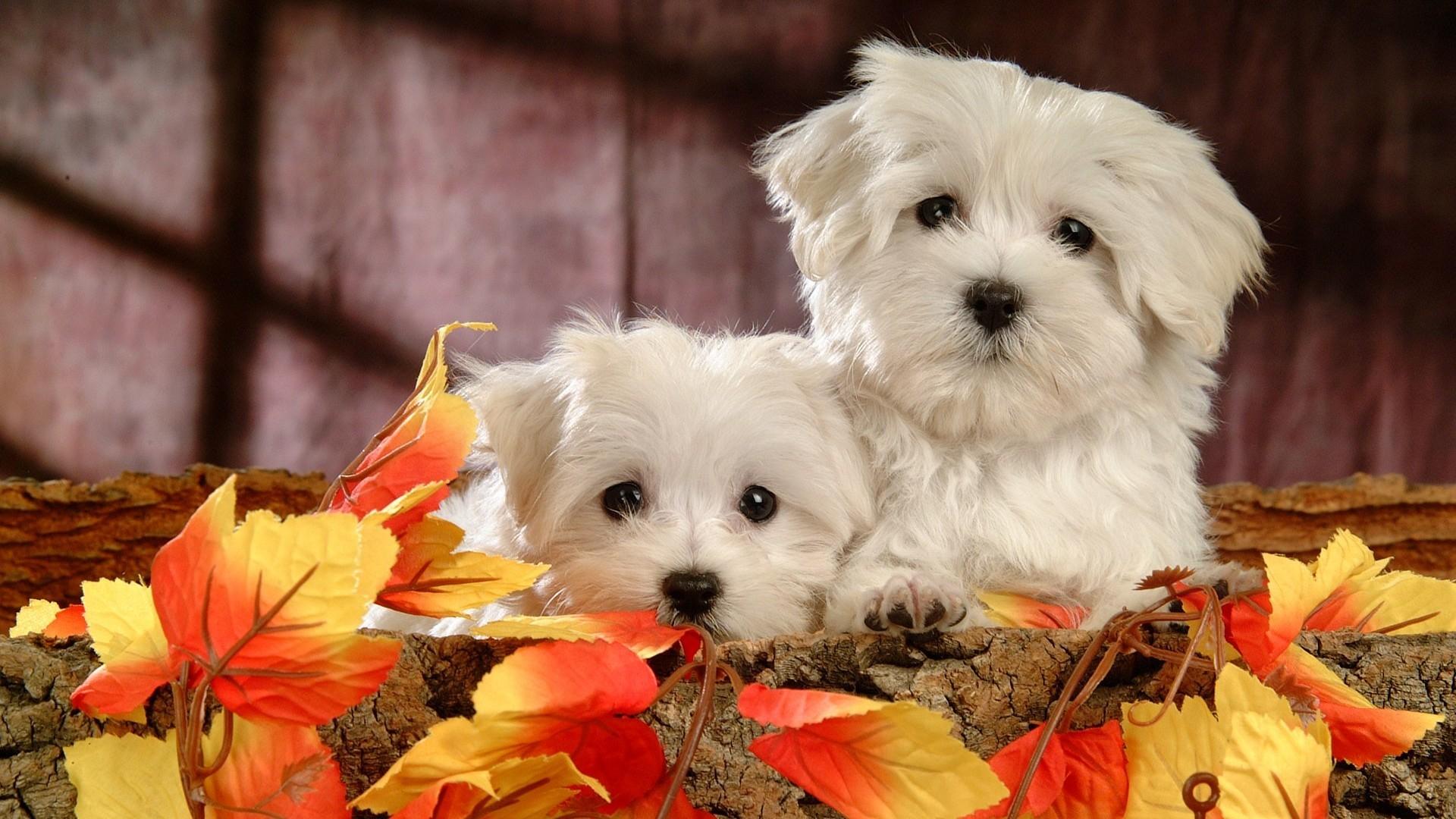 Pitbull Wallpapers 3d Die 74 Besten Hunde Hintergrundbilder