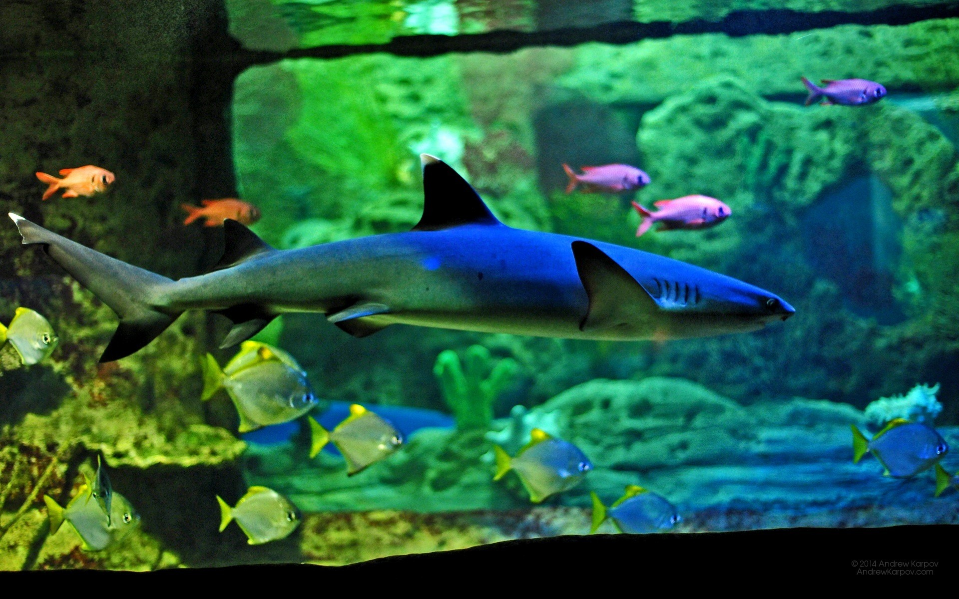 Iphone X Live Wallpaper Gif Download Die 54 Besten Aquarium Hintergrundbilder