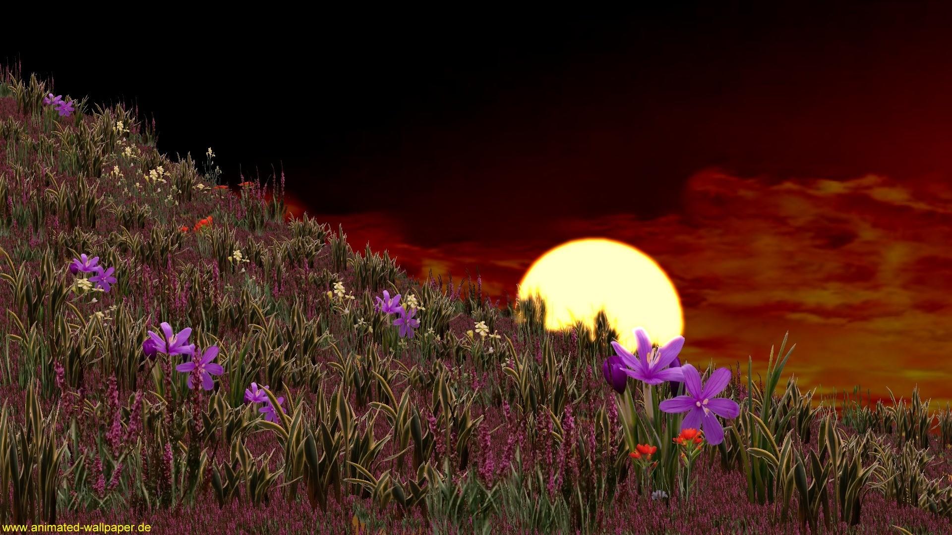Download 3d Animated Wallpapers For Windows 8 Die 73 Besten