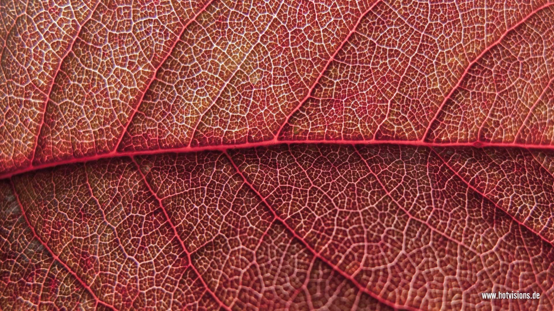 Fall Autumn Hd Wallpaper 1920x1080 Free Die 71 Besten Baum Hintergrundbilder