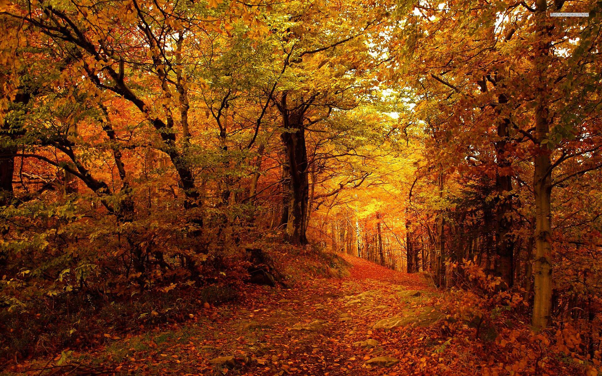 Fall Leaves Pathway Computer Wallpaper Die 83 Besten Herbst Wallpapers