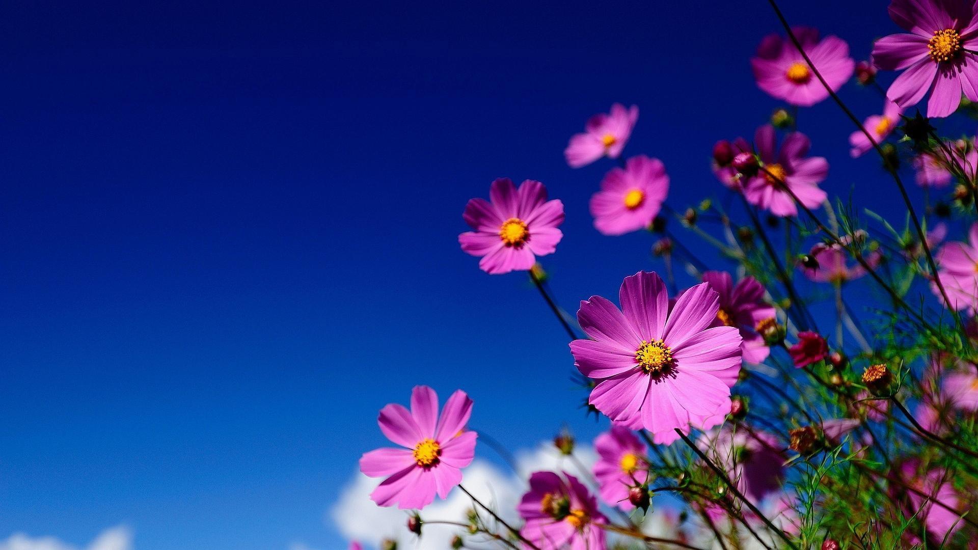 Uf Iphone Wallpaper Die 72 Besten Lila Blumen Hintergrundbilder