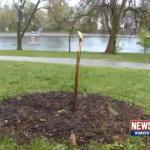 Racists Chop Down Michael Brown Tree Memorial in Ferguson