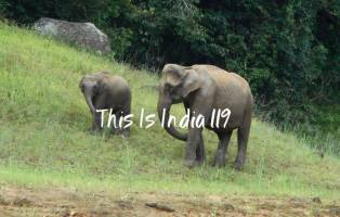 this is india 119