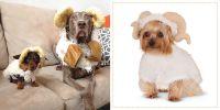 29 Best Dog Costumes for Halloween 2018 - Cute Halloween ...