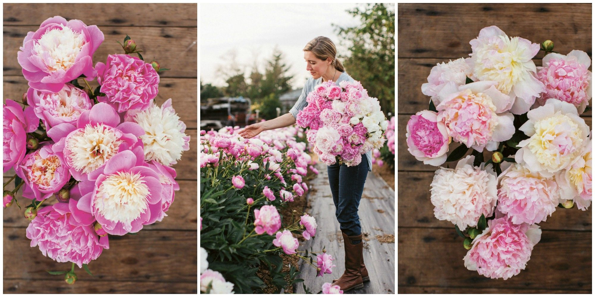 Pianese Flowers How To Grow Peonies How To Care For Peonies