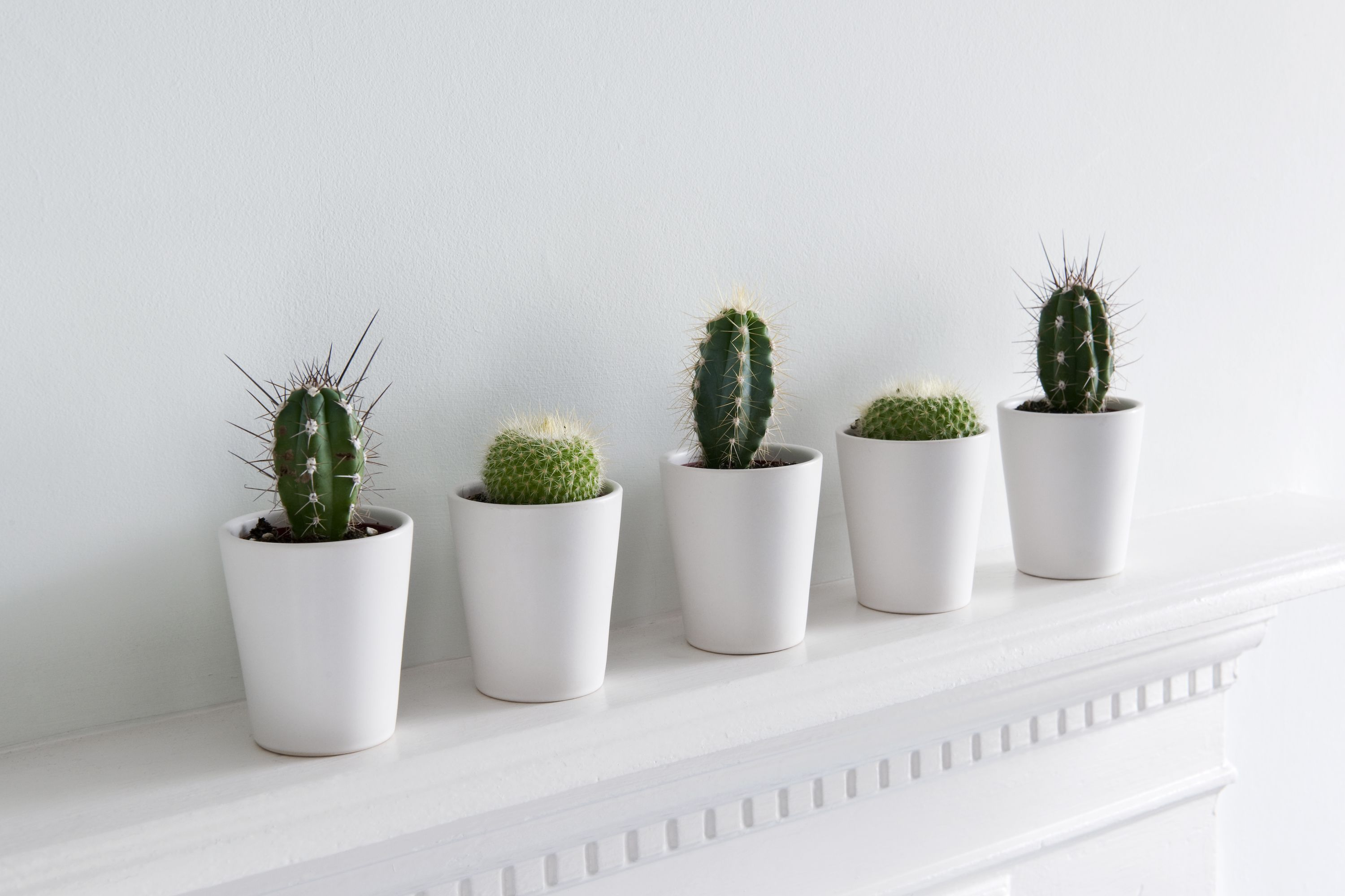 Indoor Plants For The Office 15 Best Indoor Plants For Apartments Low Maintenance Plants For