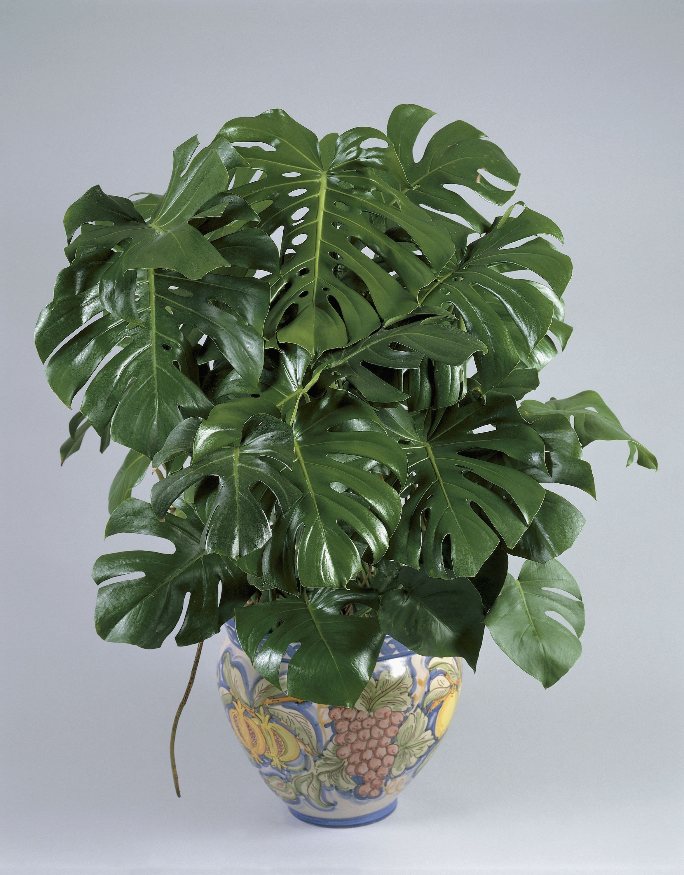 Small House Plants With Flowers 15 Best Indoor Plants For Apartments Low Maintenance Plants For