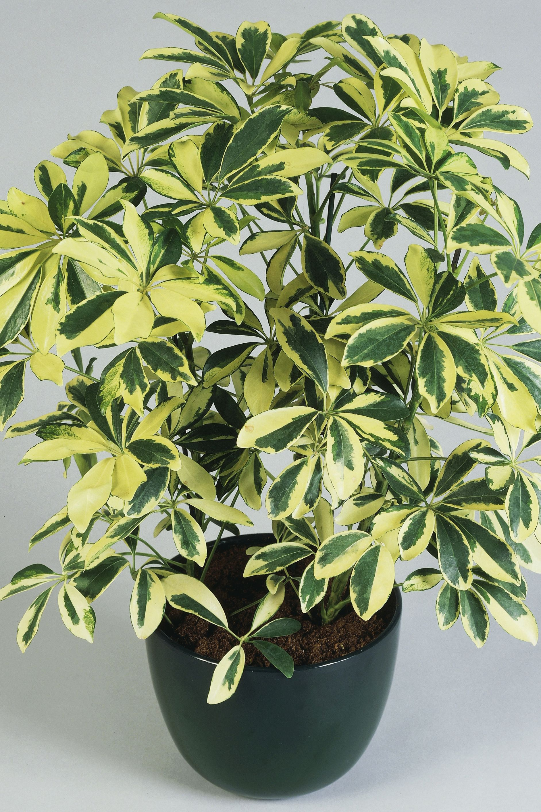 Easy To Care For Houseplants Potted Indoor Plants House Beautiful House Beautiful