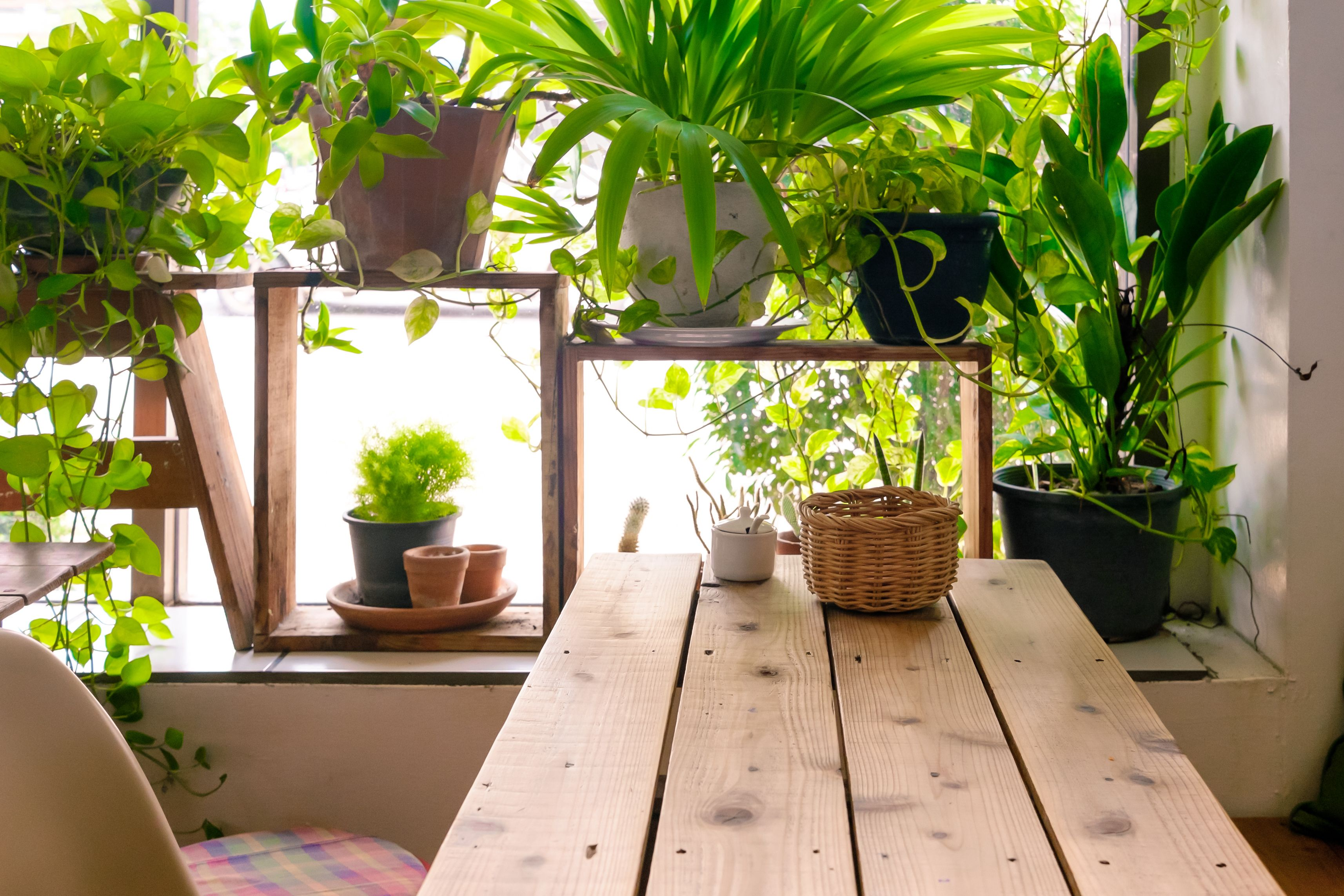 Indoor Plants For The Office 7 Best Indoor Plants For Air Quality Air Purifying Houseplants