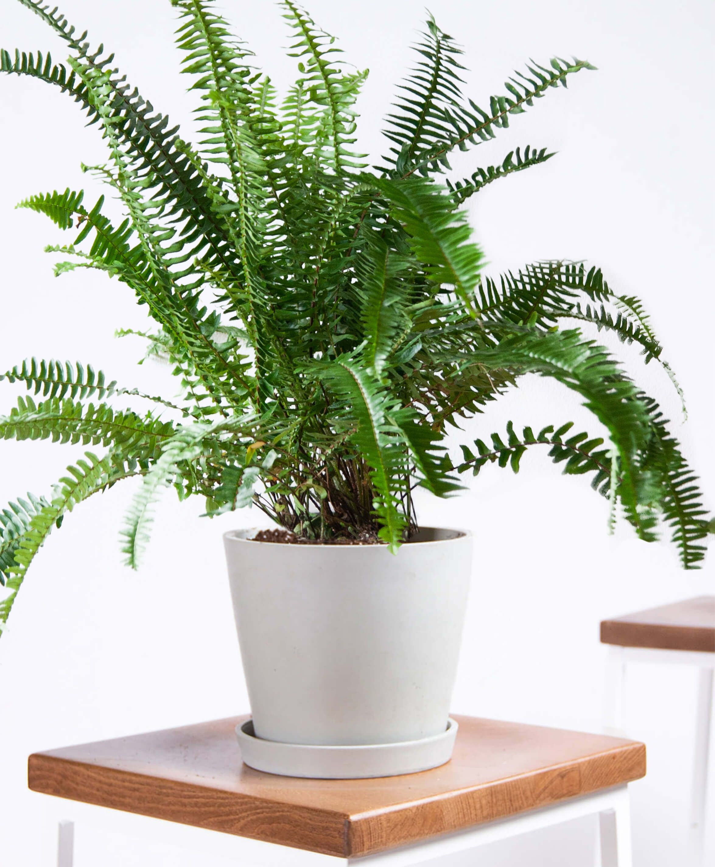 30 Houseplants That Can Survive Low Light Best Indoor Low Light Plants