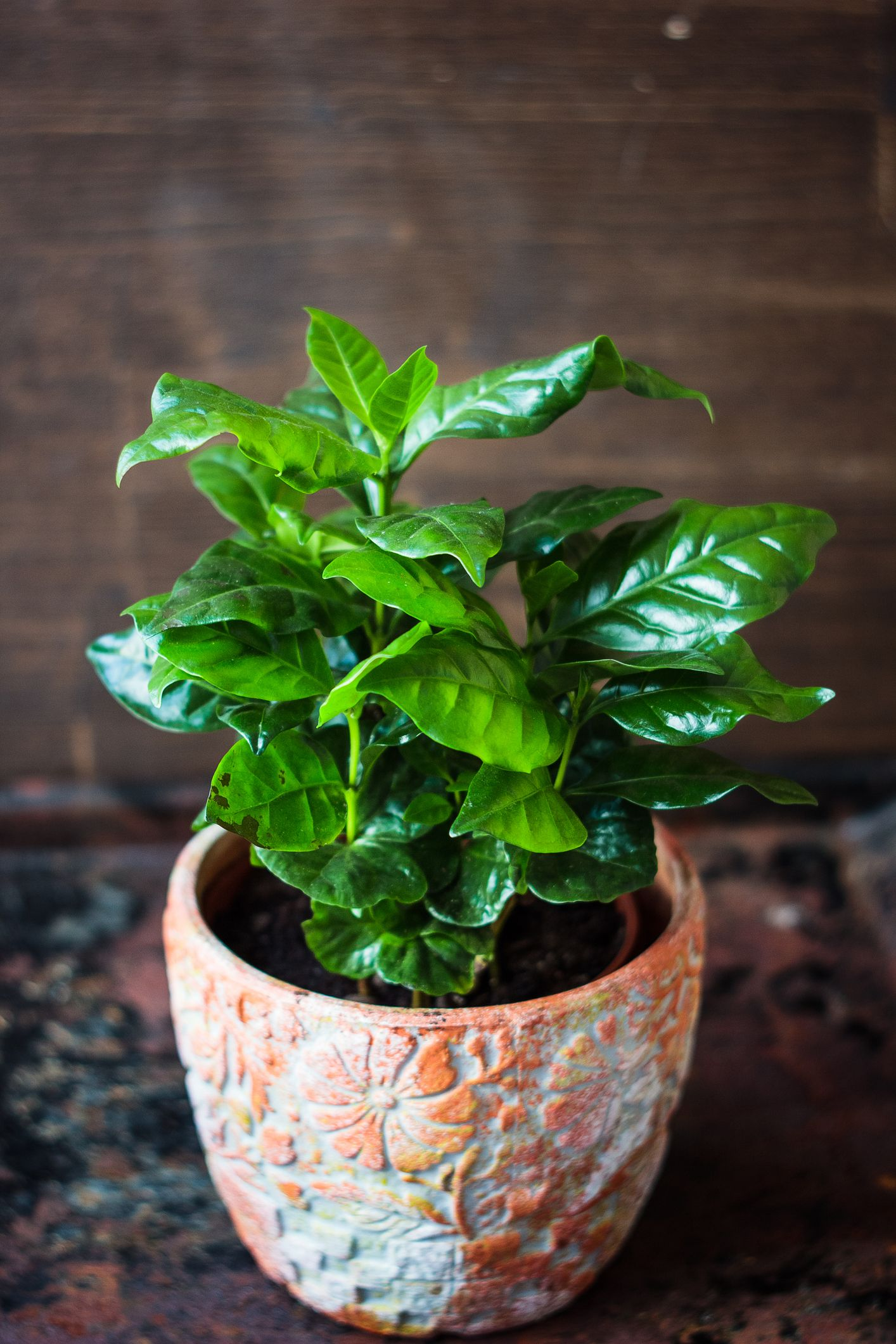35 Best Indoor Plants Good Inside Plants For Small Space Gardening