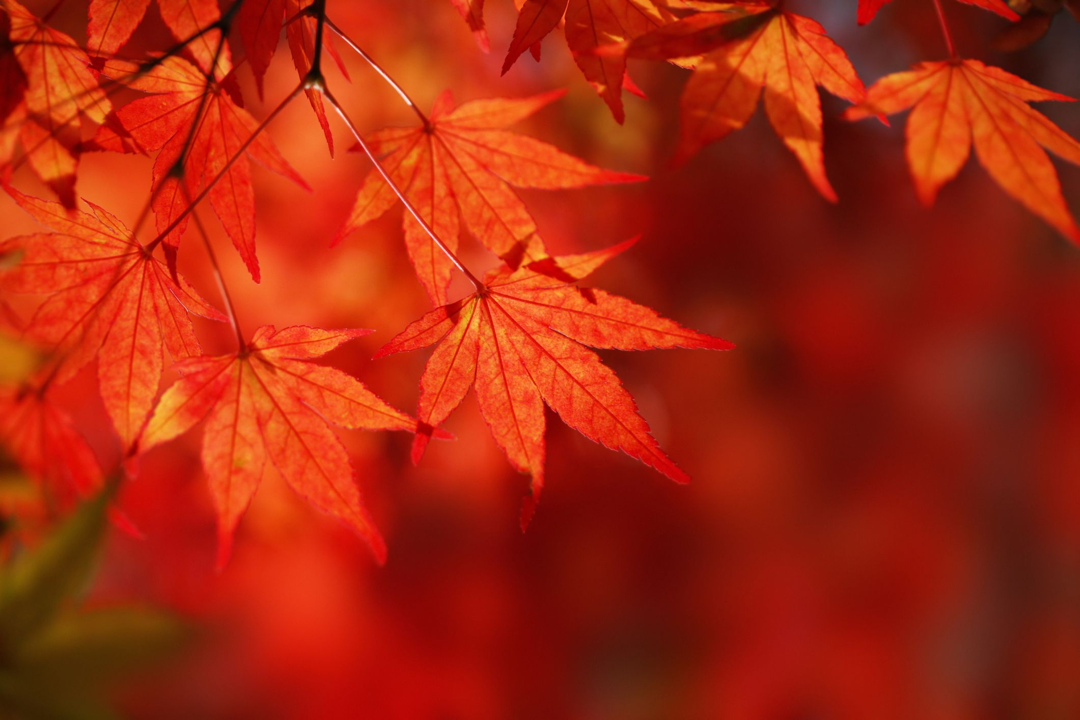 Autumn Leaf Fall Wallpaper 10 Best Places To See New England Fall Foliage 2018