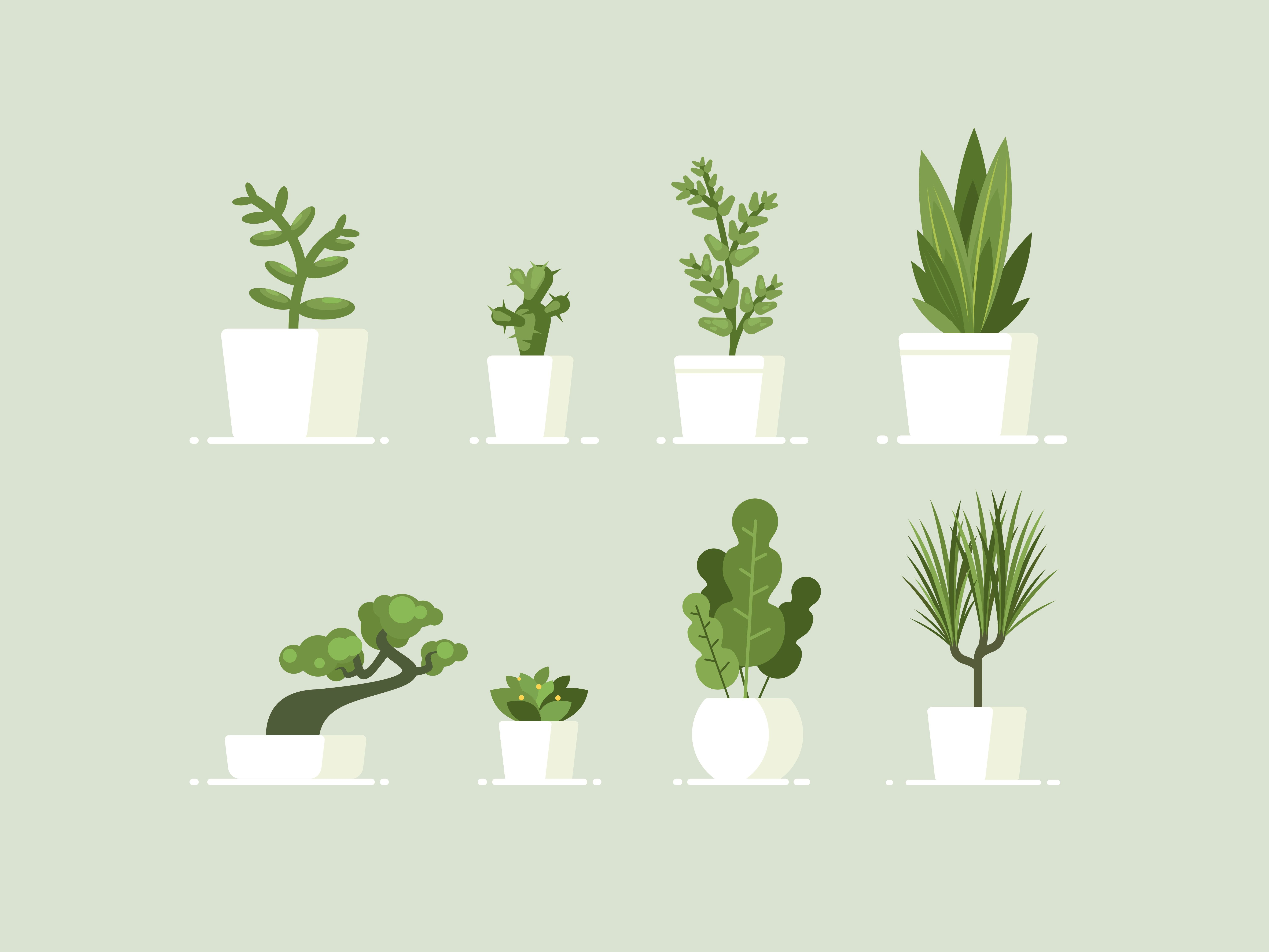 Indoor Plants Best Indoor Plants And How To Care For Them