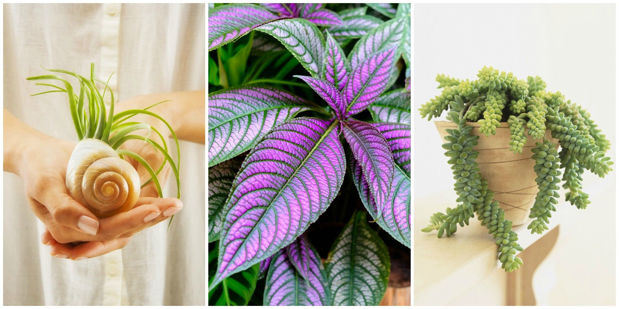 Unusual House Plants For Sale 17 Best Indoor Plants Easy Indoor Gardening Ideas