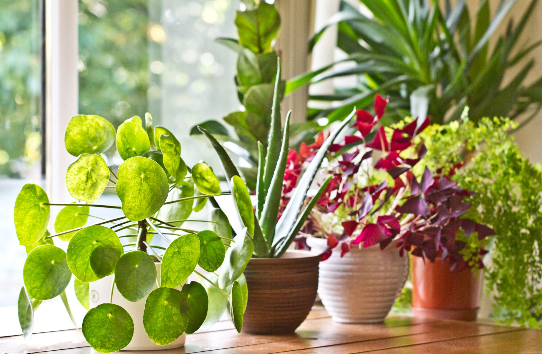 Indoor Plants For Low Light 30 Easy Houseplants Easy To Care For Indoor Plants