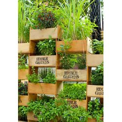 Amazing Ways To Plant A Vertical Garden How To Make A Vertical Garden Ways To Plant A Vertical Garden How To Make A Vertical Soda Bottle Vertical Garden garden Soda Bottle Vertical Garden