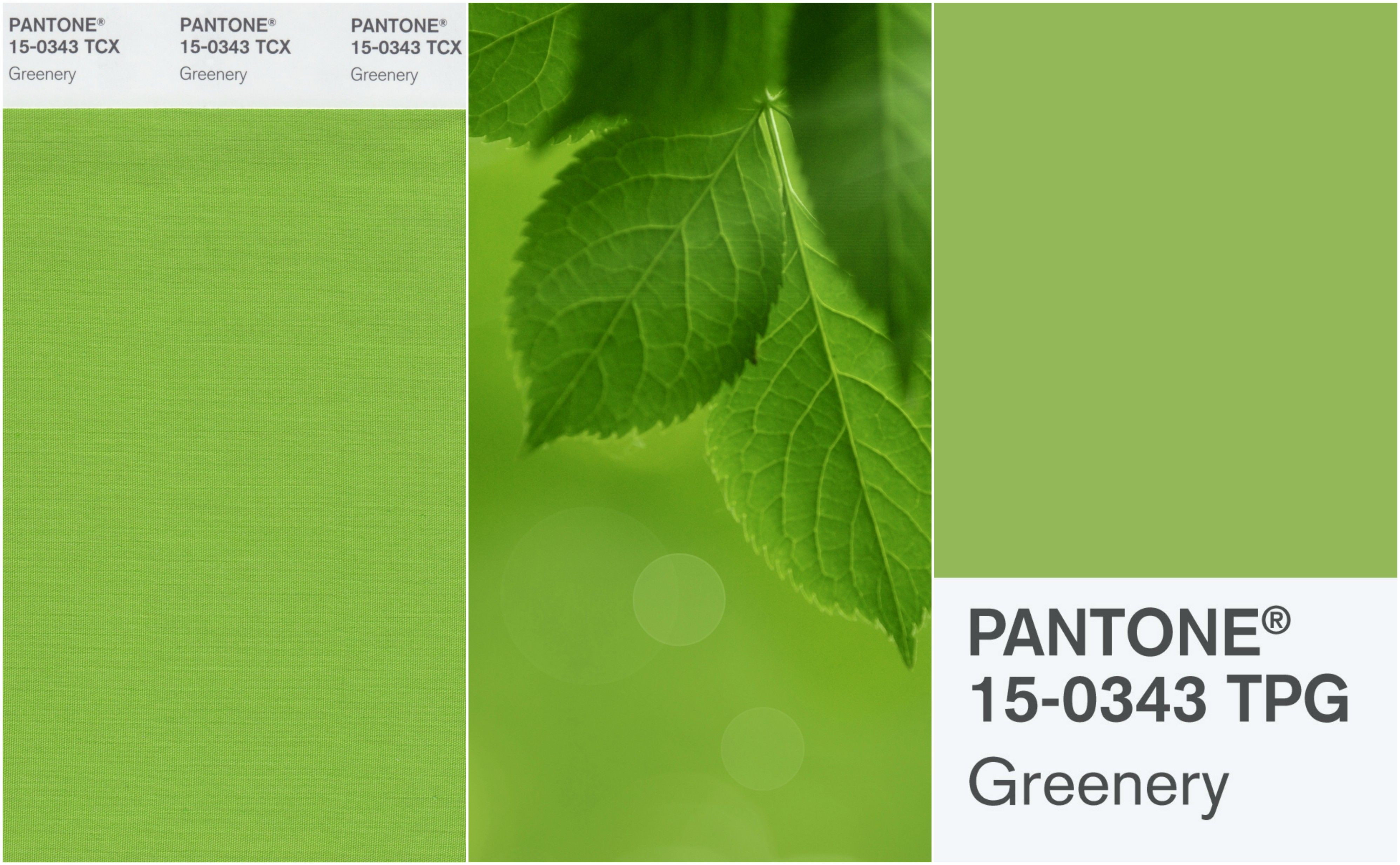 Greenery Pantone 7 Reasons Why You Should Inject Some Greenery Into Your Home