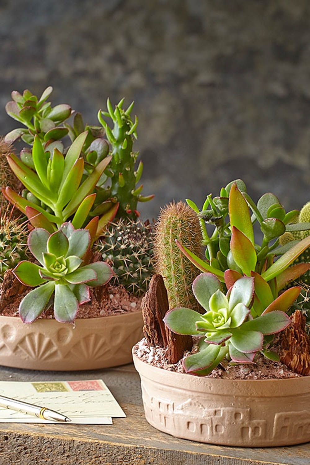 What To Buy For Housewarming Party Cactus Dish Garden