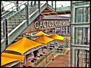 Cactus-Club-Parasols-TP-photo