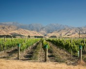 Marisco_Vineyards_with_mountain_backdrop (supplied)