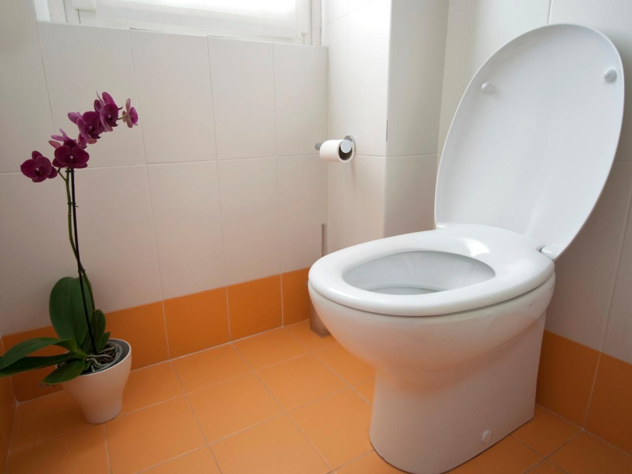 Install A Toilet How To Install A New Toilet 9 Steps Hirerush Blog