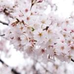 中板橋・石神井川の桜を眺めた後は、「1 ROOM COFFEE」のアイスアメリカーノとチーズケーキが恋しくなります。