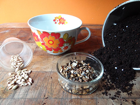 Vintage oversized tea cup, lemon seeds, gravel and compost