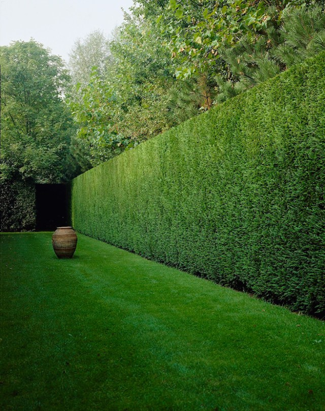 Long, tall Leylandii hedge with a large urn to give structure and proportion