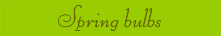 'Spring bulbs' blog post banner