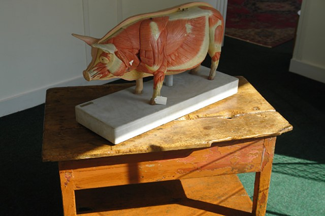 Anatomical figure of a pig in the new shop space next to ours | H is for Home