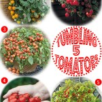 Gimme Five: Tumbling tomatoes